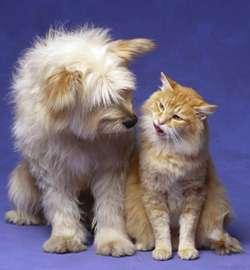 Cat&dog01